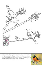 Baltimore Oriole Coloring Page