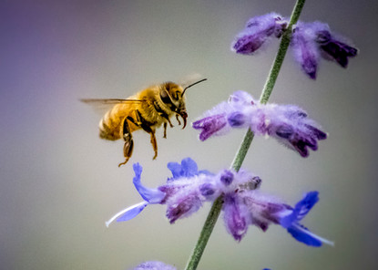Pollinator -Chris Split Photography