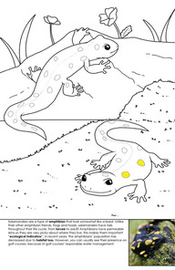 Spotted Salamander Coloring Page
