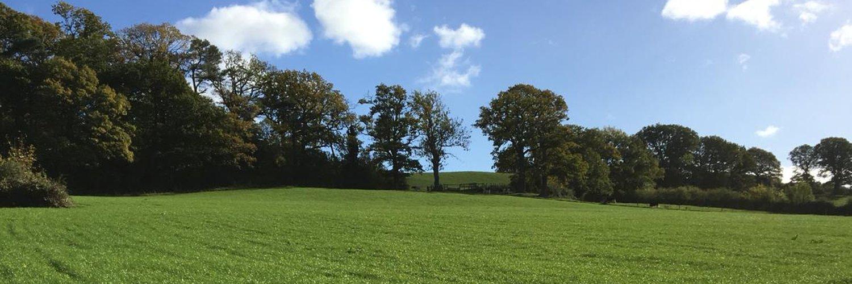 Back Left Field