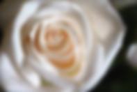 Rose By Aziza Kibibi