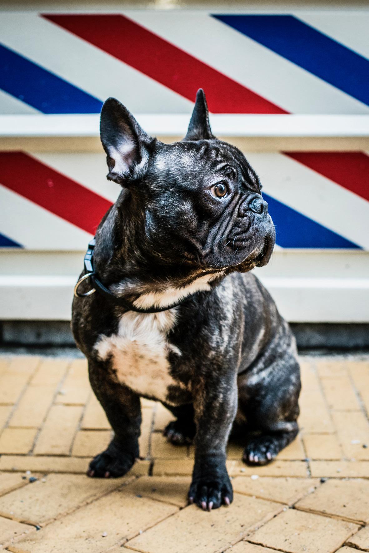 Hond Raaf