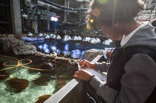 Aquarium 9.jpg