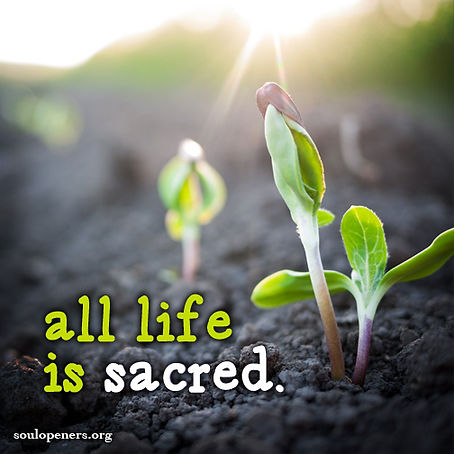 All life is sacred.