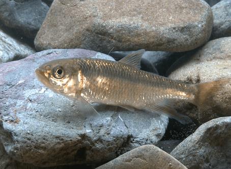 71/365今日の名言:水清ければ魚棲まず 班超