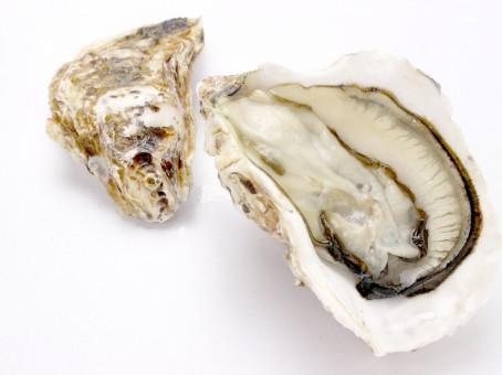 (23/365)今日の名言:初めて牡蠣を食った人間は大胆な人間であった。ジョナサン・スウィフト