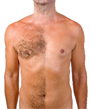 male-chest_edited.png