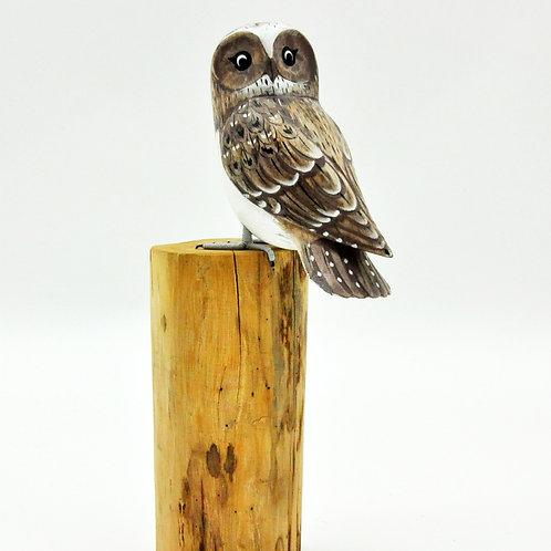 OWL ON LOG
