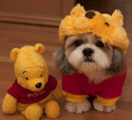 Dogs and Halloween: Should They Dress Up?