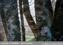 Ligne-d'arbre,-Sologne-2004