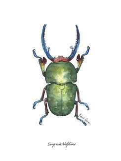 raphael chesnier scarabees lamprima adol