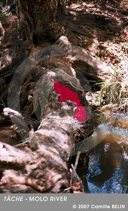 Tache,-Molo-river,-2007