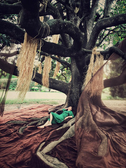 sieste sonore sous le magnolia- installa