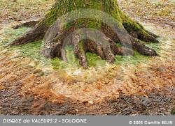 Disque-de-valeurs2,-Sologne-2005