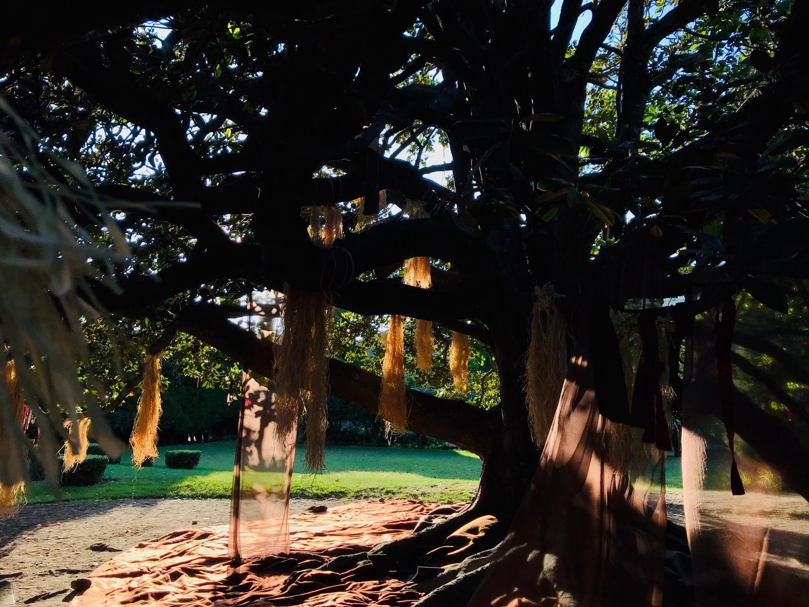 le_magnolia_se_réveillant_le_matin