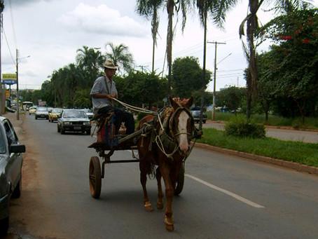 Vereadora quer retirada gradativa de carroças das ruas de Anápolis