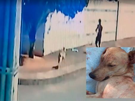 Causa animal: nova lei é sancionada em um momento de revolta por morte de cão