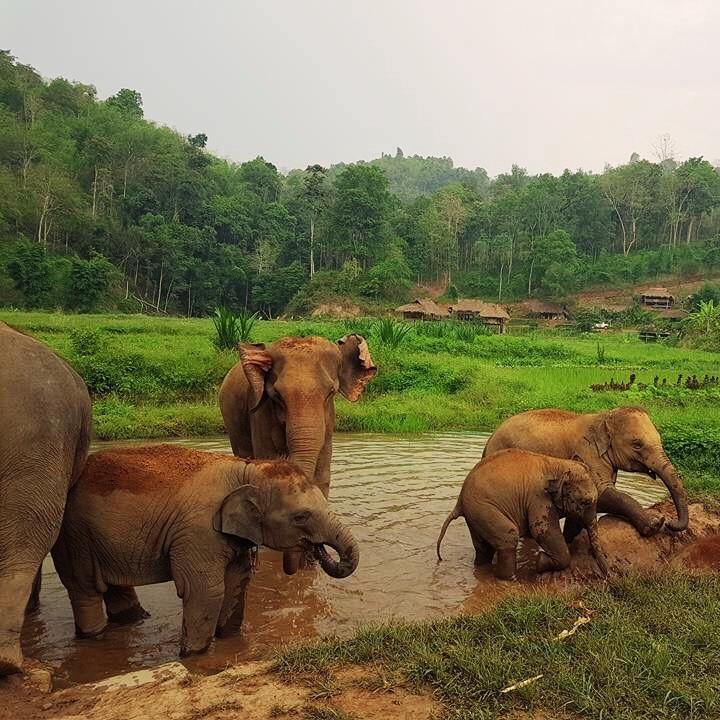 éléphants Chiang Mai