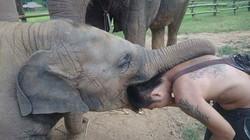 Loolu et les éléphants