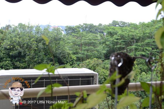 Urban Beekeeping In Singapore?