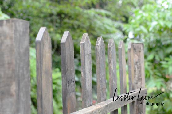 Thru The Lens, Thru The Fence.