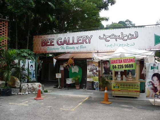 Beekeeping in Malaysia – Penang (The feasibility study Part 1)