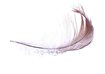 light brown feather isolated on white ba