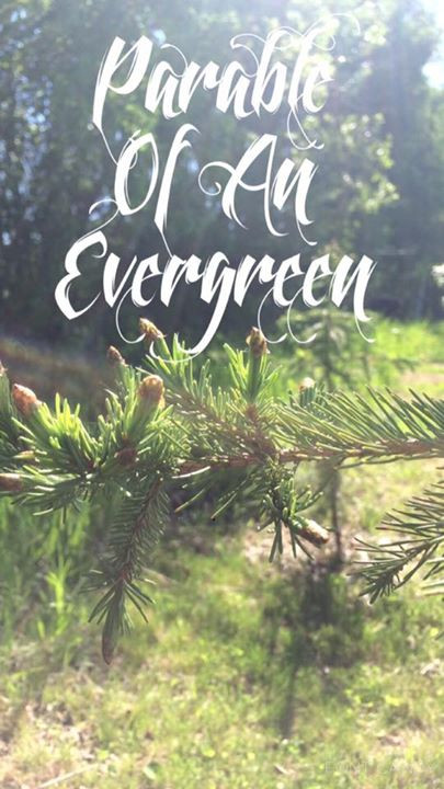 Parable of an evergreen