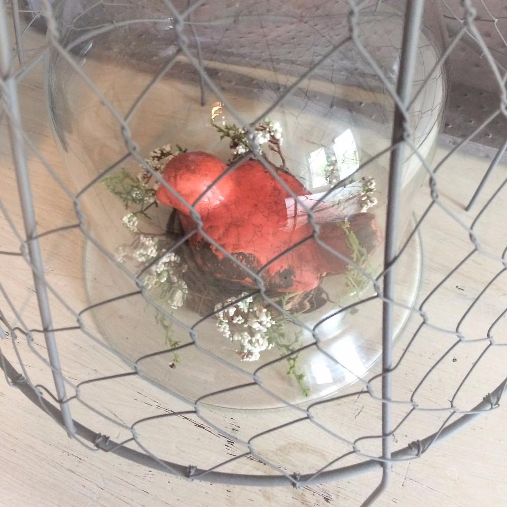 Bird under a cloche