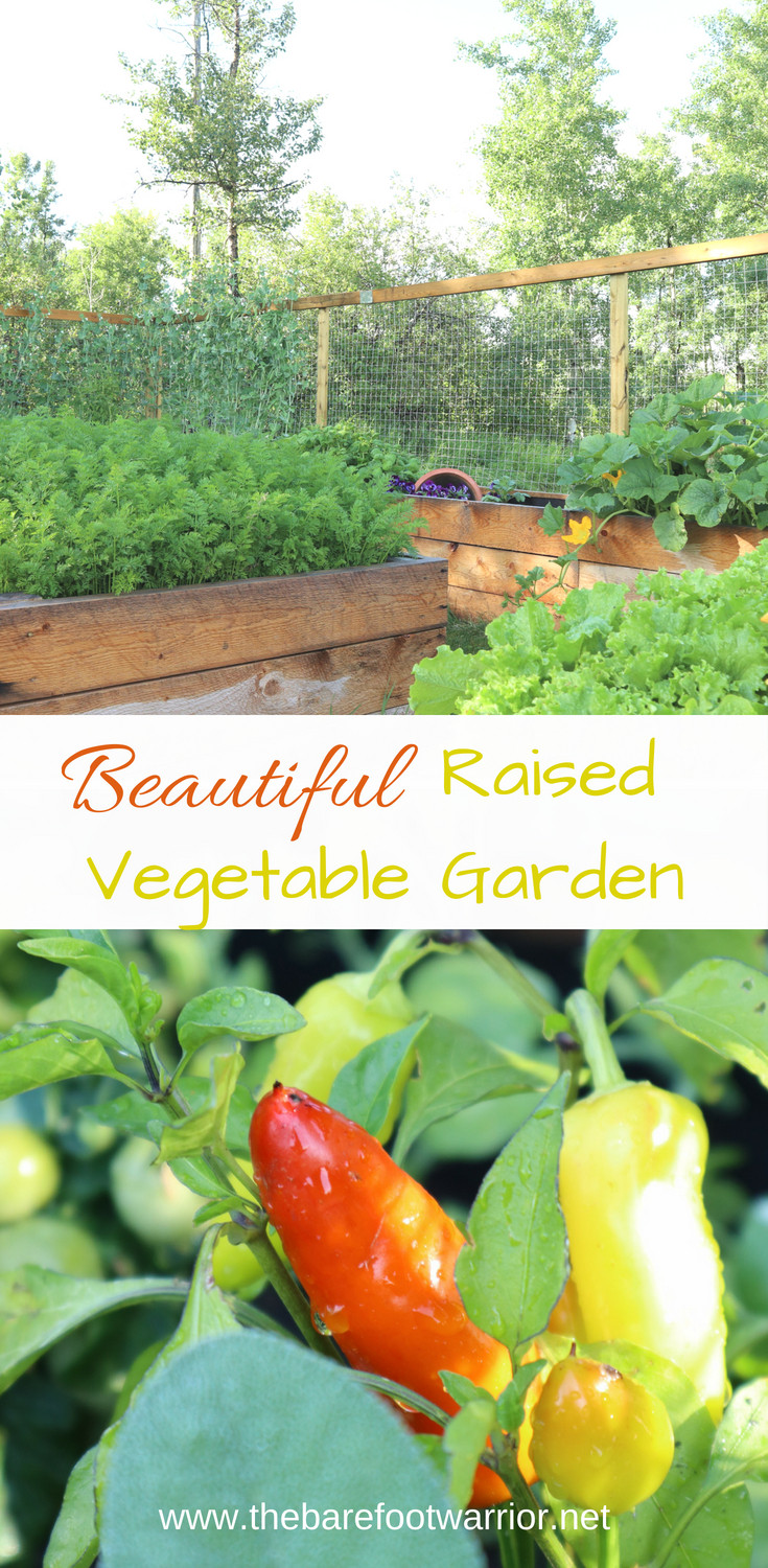 Beautiful Raised Vegetable Garden