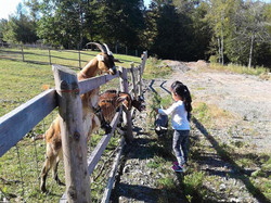 Phee's Farm