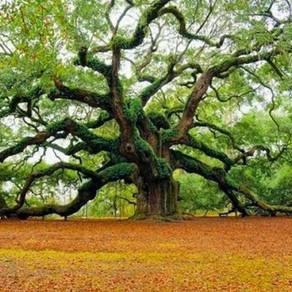 Δέντρα: Σκέψεις και Ποιήματα (απόσπασμα) - Hermann Hesse