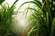 Funky Fibres fibre de canne de sucre.jpg
