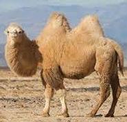 Funky Fibres Camel pic.jfif