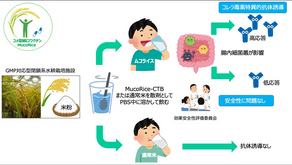 A big step toward the realization of MucoRice, a drinkable vaccine made from rice