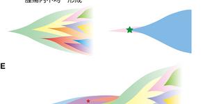 SHIROKANE を用いてがん治療戦略開発のための数理的基盤を構築