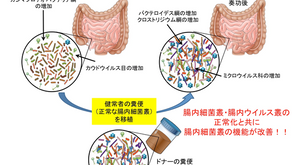 糞便移植治療によって腸内細菌叢が機能回復するメカニズムを解明