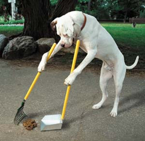 Pet Waste Must be Picked Up!
