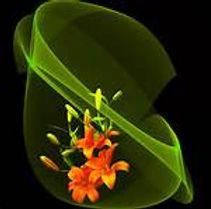 biodanza7.jpeg