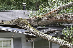 Roof-Tree-Damage-MenzelRoofingServices,L