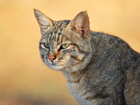 ¿Porqué los gatos actúan tan extraño?