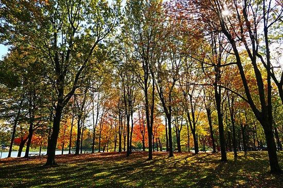 Parc du Mont-Royal.jpg