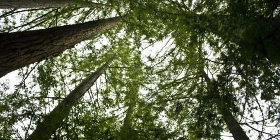 Los Altos Goes Green