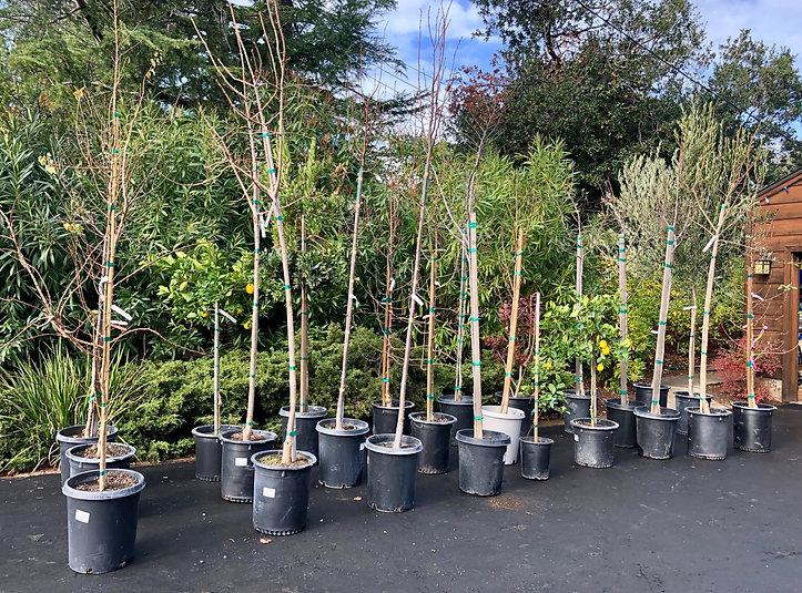 500_trees_waiting.jpg
