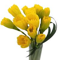 Miniature Beauties - Daffodils  (2).png