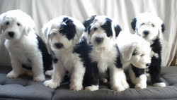 Aurora,Agata,Annabella Alessia, Adel