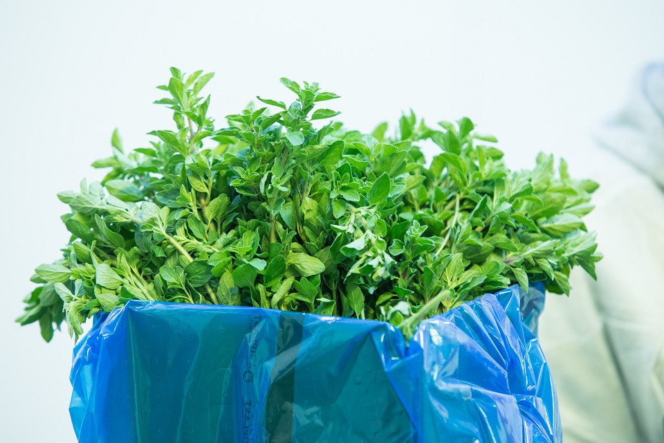 Agriculture Wrap - Blue Bags for Spice Preservation