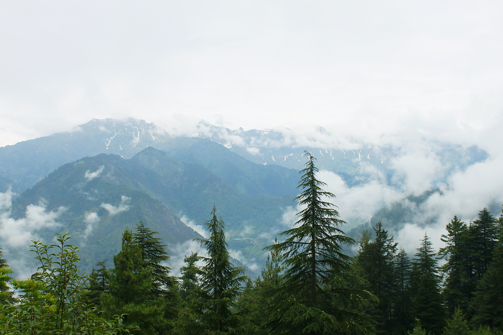 Snowy Himalayan peaks with rolling clouds and coniferous trees in the forefront © Kriti Bajaj