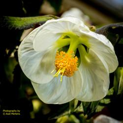 Garden Flowers-19
