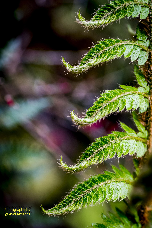Eden Garden 2015-35